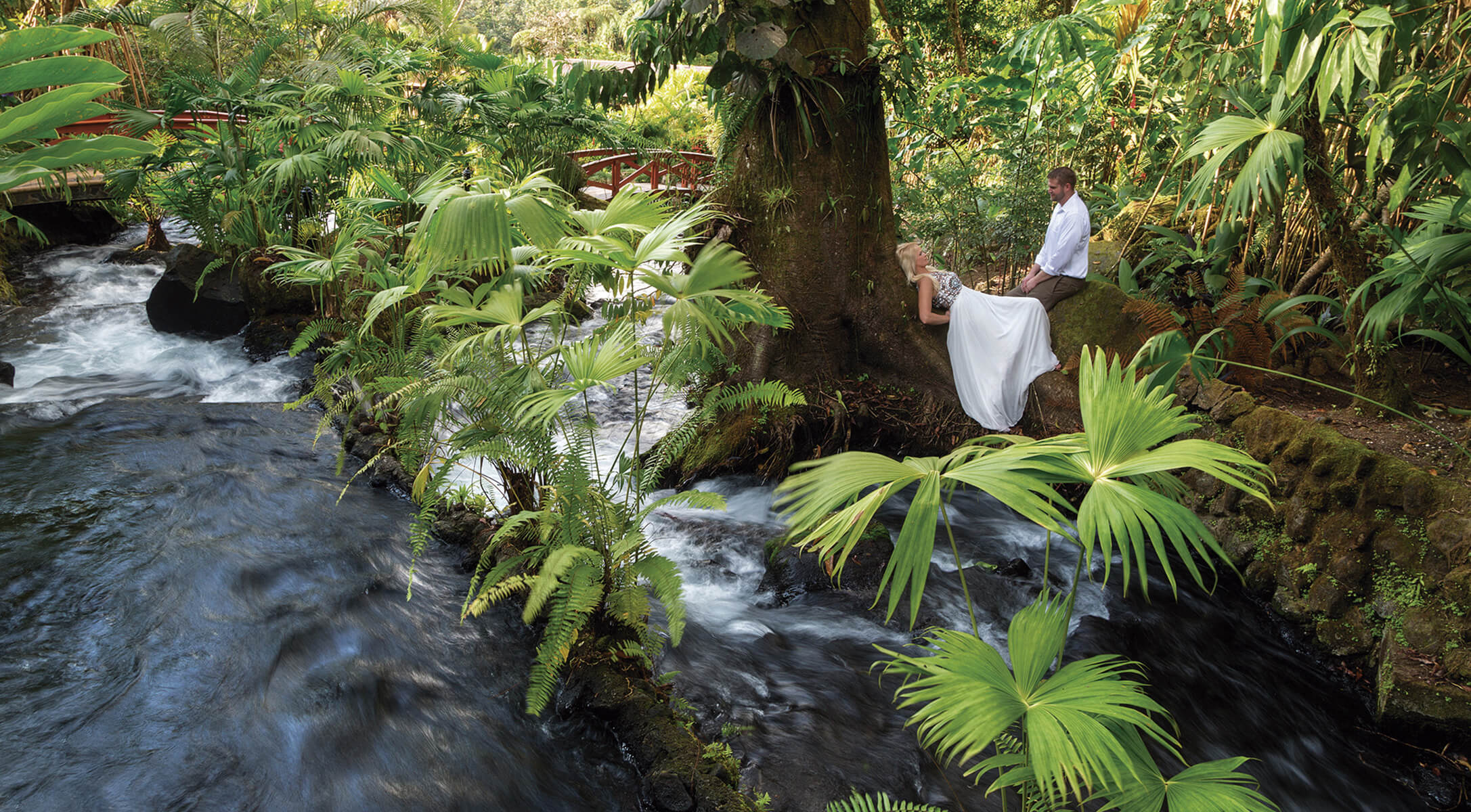 couple sitting next to waterfall and leaning up against large tree surrounded by rainforest wildlife