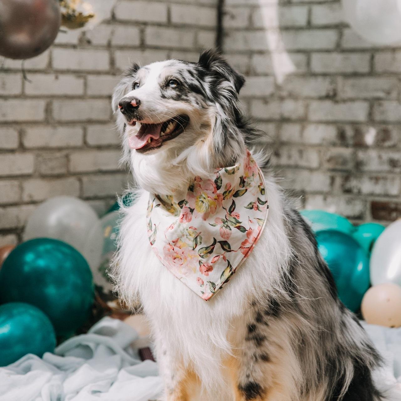 a dog wearing a floral bandana